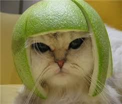 cat with rind on head
